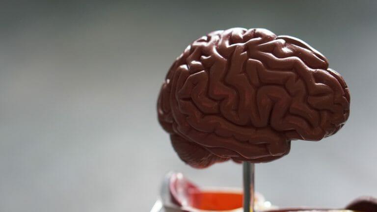 parkinson cérebro