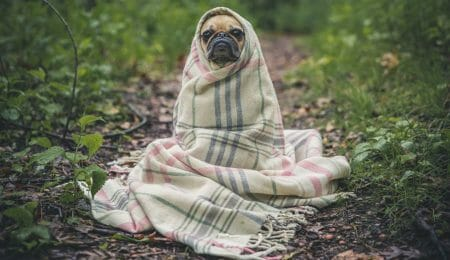 frio cobertor hipotireoidismo