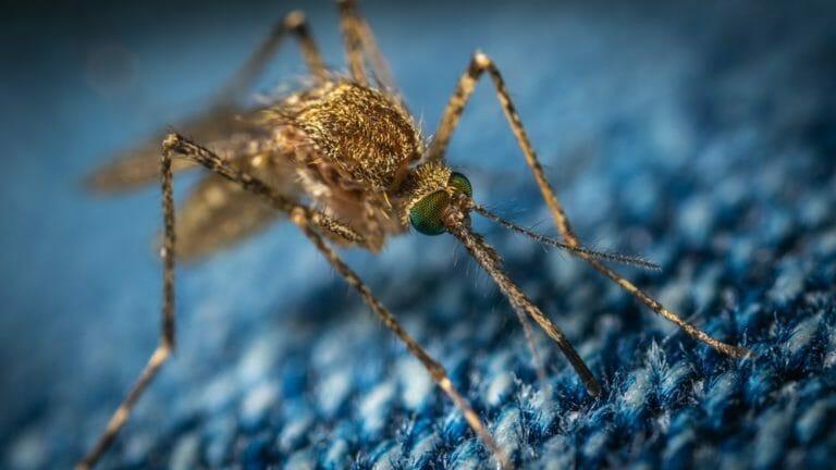 dengue zika e chikungunya