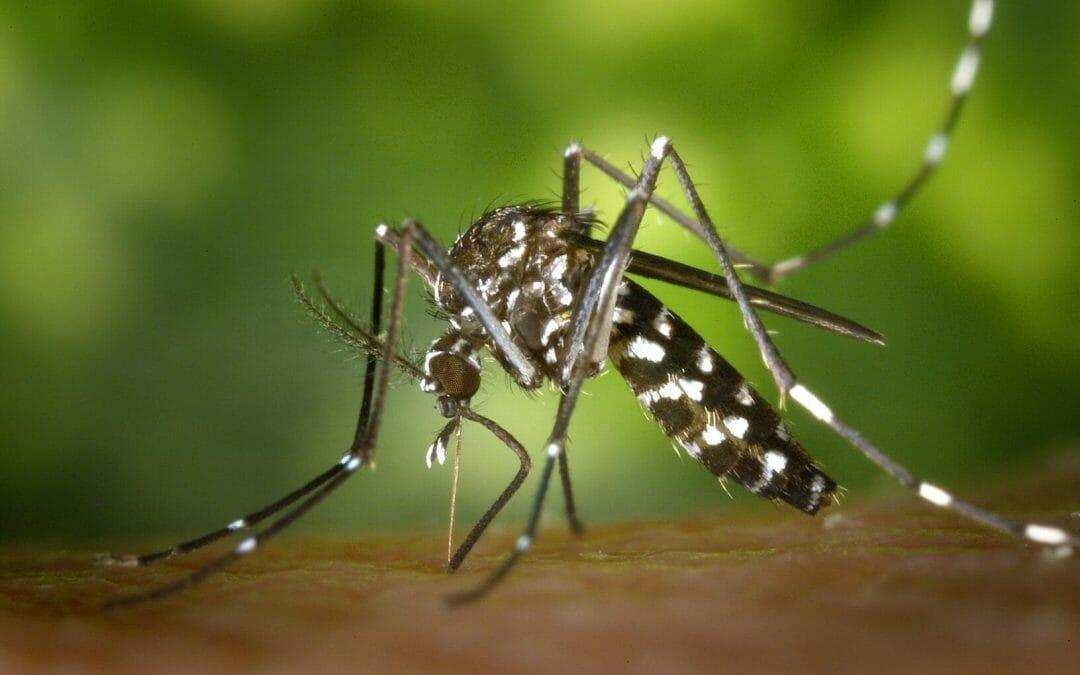 Dengue (GUIA COMPLETO): causas, sintomas e tratamentos